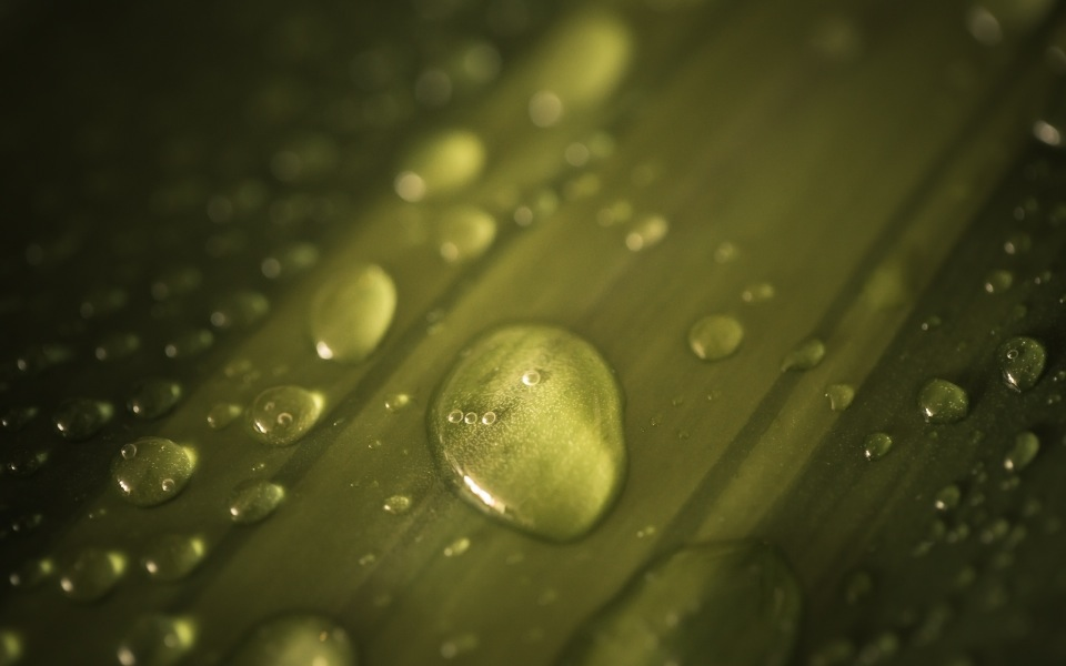 wpid-drops_on_a_leaf-2013-08-1-12-55.jpg